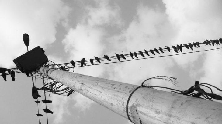 電線にとまった小鳥やカラスが感電しない理由とは?