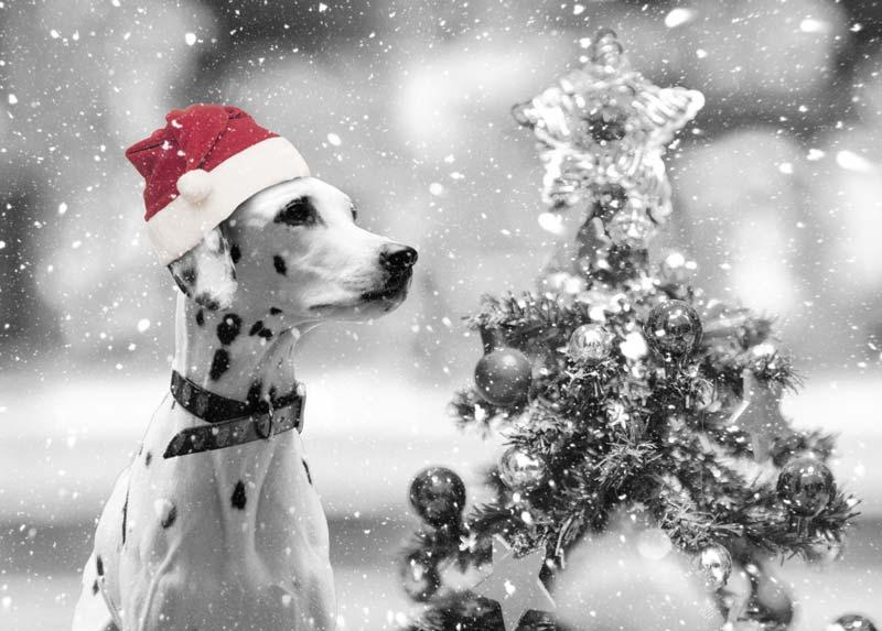 犬のパートカラー白黒画像