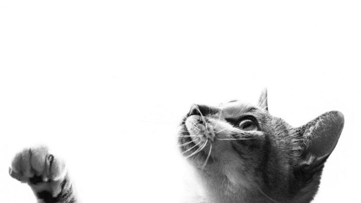 【全然別物】モノクロと白黒の違い