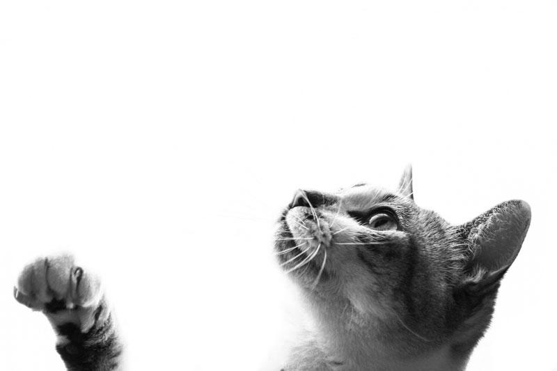 猫の白黒画像