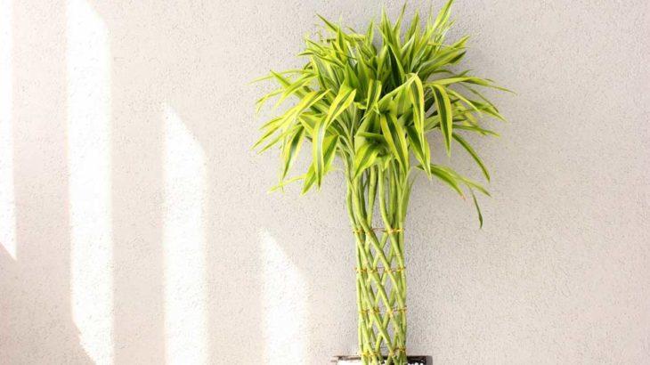 銀行の出入り口に必ず観葉植物がある理由